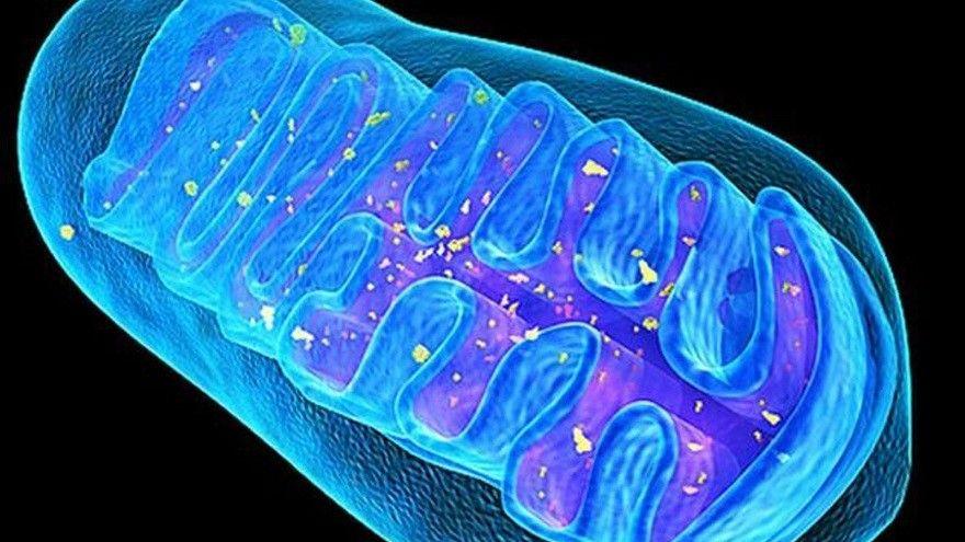 模擬粒線體活細胞模型登權威雙期刊 兒童粒線體疾病治療帶來一線希望-環球生技月刊